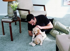 man playing with puppies on carpet floor in a Vancouver home